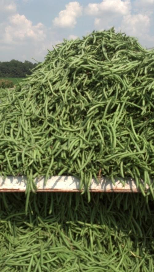 green bean pile